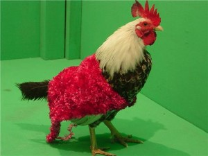 Your pet chicken stays at home, wearing a data suit